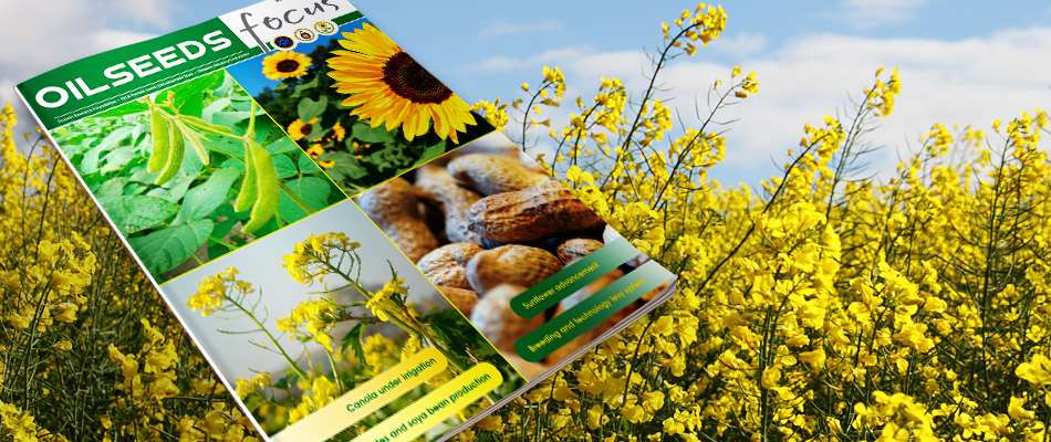 Cover image of Oilseeds Focus Vol 4 No 3